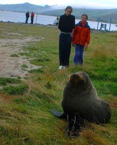Fur Seal 2cropped
