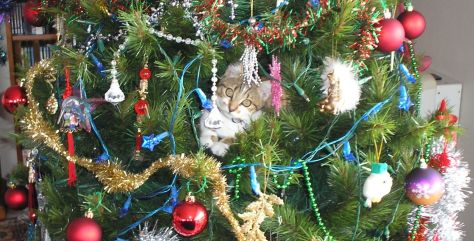 My kitten, Ripley, cheekily climbing our Christmas tree