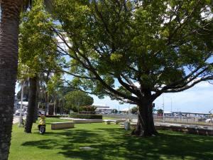 Downtown Tauranga 031