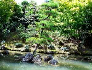 Japanese Pond 2
