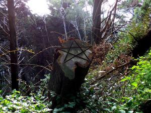 I found this somewhere on Mount Victoria