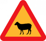 Warning Sheep