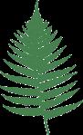 fern-159715_640