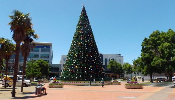 new zealands biggest christmas tree - Biggest Christmas Tree