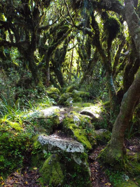 Goblin Forest Taranaki New Zealand