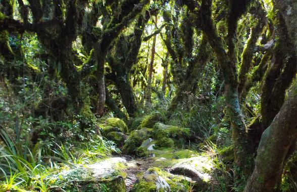 Goblin Forest, Taranaki, New Zealand by Abigail Simpson