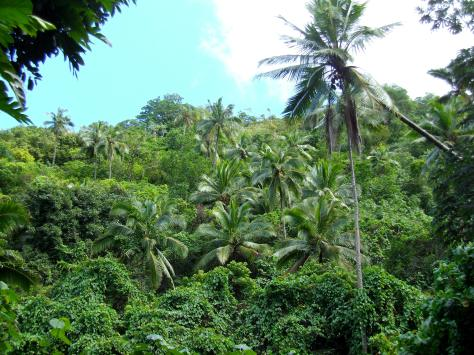 Rarotongan Jungle
