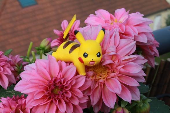 pokemon-1529246_960_720