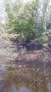 sunonwater