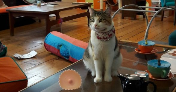 Auckland Cat Cafe, Barista Cats