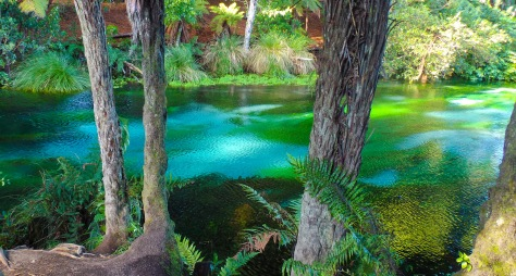 Hamurana Springs, Rotorua, New Zealand