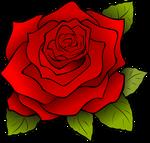 flower-156608_960_720