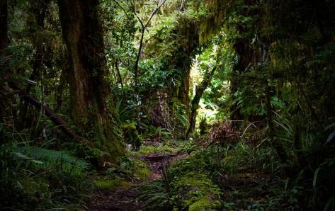 Goblin Forest, Taranaki