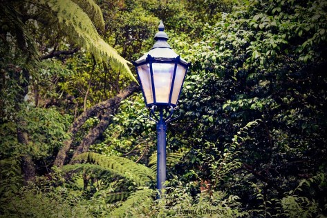 lamppost in forest