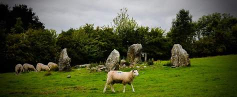 Sheep with Stone Circle Abigail Simpson