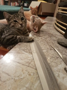 kittenswithswords