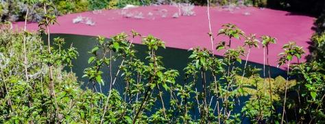 waimangu volcanic valley lake red algae