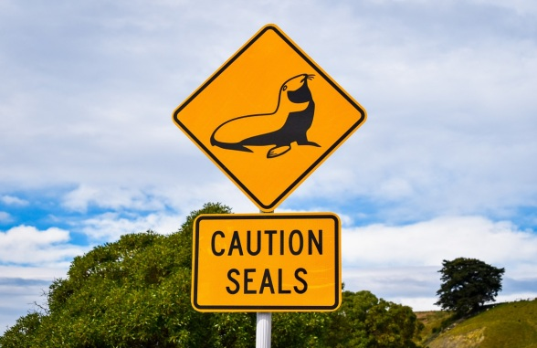 kaikoura seal sign