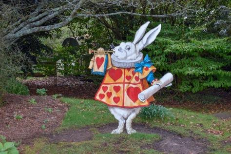 larnach castle white rabbit